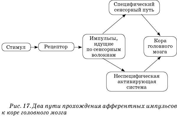 структурно функциональная девушка модель работы мозга три блока мозга